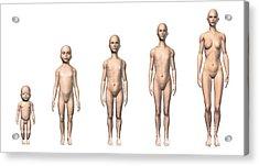 Female Human Body Scheme Of Different Acrylic Print