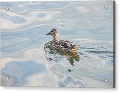 Female Mallard Duck On A Glassy Lake Acrylic Print by Photographic Arts And Design Studio