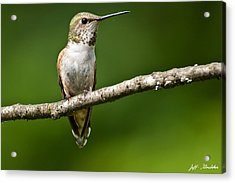 Acrylic Print featuring the photograph Female Rufous Hummingbird In A Tree by Jeff Goulden