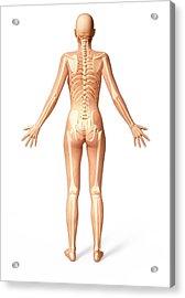 Female Skeleton Acrylic Print
