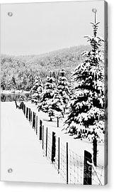 Fence Line Acrylic Print by Tim Wilson