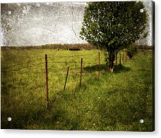 Fence With Tree Acrylic Print