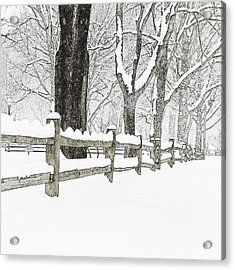 Fenced In Forest Acrylic Print by John Stephens