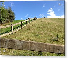 Fenced Pasture Acrylic Print by Ron Torborg