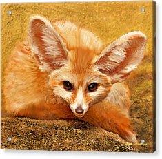 Fennec Fox Acrylic Print by Jane Schnetlage