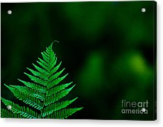 Fern 2012 Acrylic Print by Art Barker