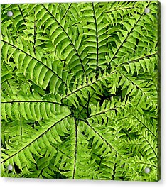 Fern Abstract Acrylic Print