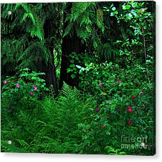 Fern And Wild Roses Acrylic Print