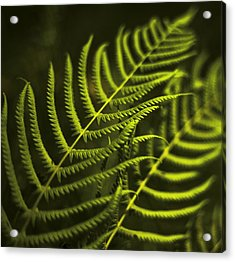Acrylic Print featuring the photograph Fern by Bradley R Youngberg