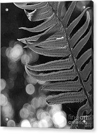 Fern Detail Acrylic Print