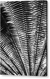 Fern Frond Acrylic Print by Steven Ainsworth