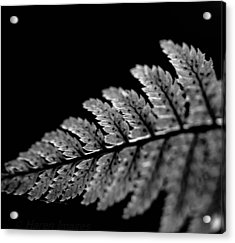 Acrylic Print featuring the photograph Fern In Cameo by Haren Images- Kriss Haren