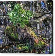 Fern In The Swamp Acrylic Print