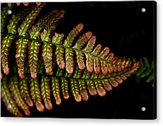 Acrylic Print featuring the photograph Fern by Sonya Lang