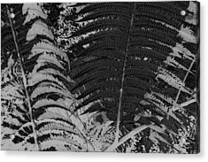 Ferns Acrylic Print by Colleen Cannon
