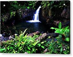 Ferns Flowers And Waterfall Acrylic Print by Thomas R Fletcher