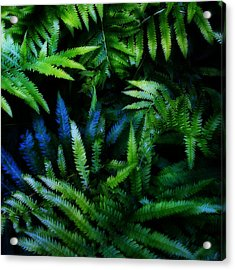 Ferns Acrylic Print by Matt Lindley