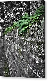Ferns On Old Brick Wall Acrylic Print