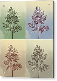 Ferns Times Four Acrylic Print by Andrea Dale