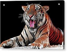Ferocious Tiger Acrylic Print