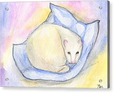 Ferret's Day Off Acrylic Print