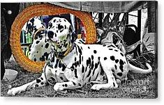 Festival Dog Acrylic Print