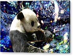 Festive Panda Acrylic Print by Mariola Bitner