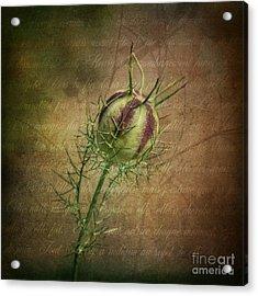 Fey Poppy Magic Acrylic Print