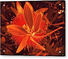 Fiber Optic Flower Acrylic Print