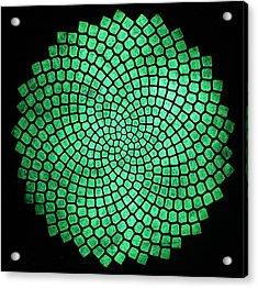 Fibonacci Sunflower Acrylic Print by Twilight Vision