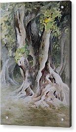 Ficus Aurea Acrylic Print