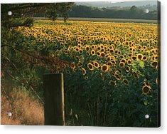 Field Dreams No.2 Acrylic Print