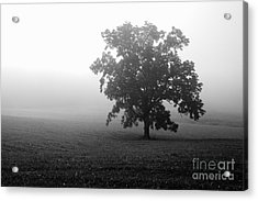 Field In Cades Cove Acrylic Print