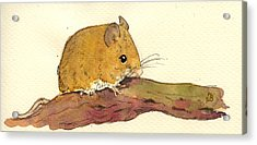 Field Mouse Acrylic Print