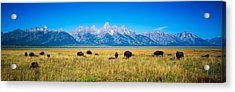 Field Of Bison With Mountains Acrylic Print by Panoramic Images