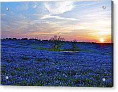Field Of Blue Acrylic Print by John Babis
