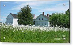 Field Of Daisies 2 Acrylic Print by Christopher Mace