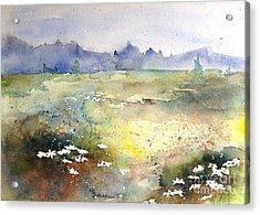Field Of Daisies Acrylic Print by Marilyn Zalatan