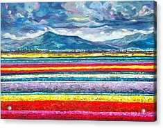 Field Of Dreams Acrylic Print by Suzanne King