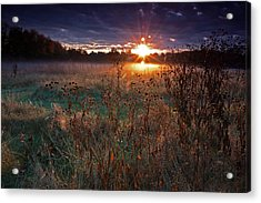 Field Of Dreams Acrylic Print by Suzanne Stout