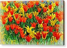 Field Of Dreams........ Acrylic Print