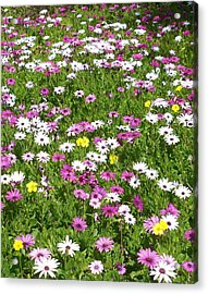 Field Of Flowers Acrylic Print by Deborah Montana