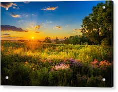 Field Of Flowers Sunset Acrylic Print by Mark Goodman
