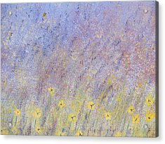 Field Of Flowers Acrylic Print by Tim Townsend