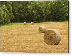 Field Of Freshly Baled Round Hay Bales Acrylic Print