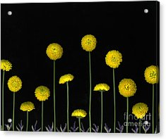 Field Of Gold Acrylic Print by Christian Slanec