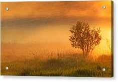 Field Of Gold Acrylic Print