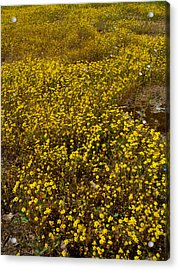 Field Of Goldfields In Park Sierra-ca Acrylic Print by Ruth Hager