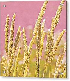 Field Of Grass And Wildflowers IIi Acrylic Print