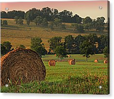 Field Of Hay Acrylic Print